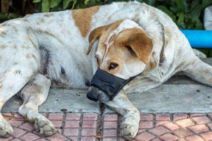 dog bite-injury-child